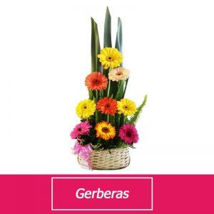 Gerberas